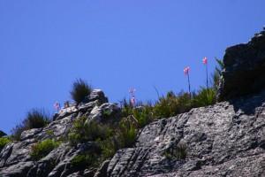 kiten-suedafrika-2008-46